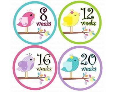 Destiny - Sweet Birds Monthly Photo Stickers